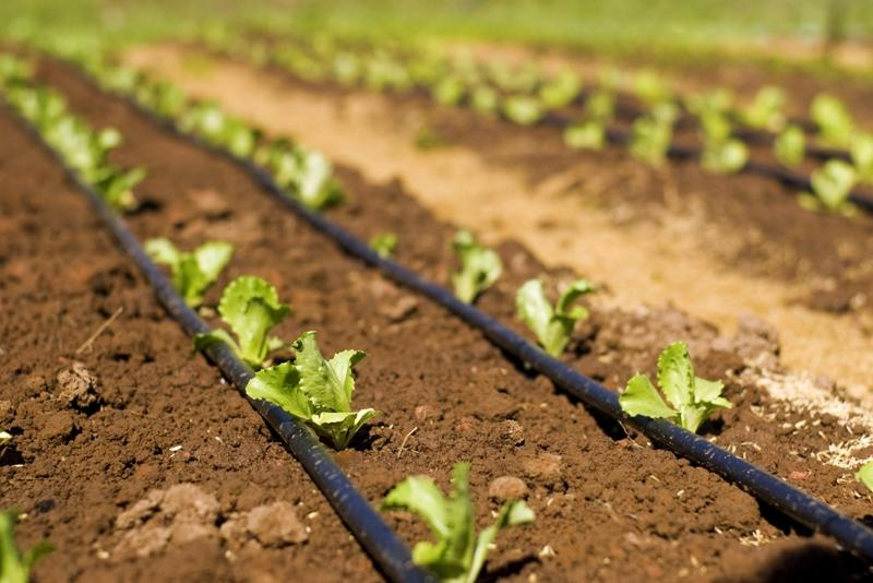 india micro irrigation system market outlook